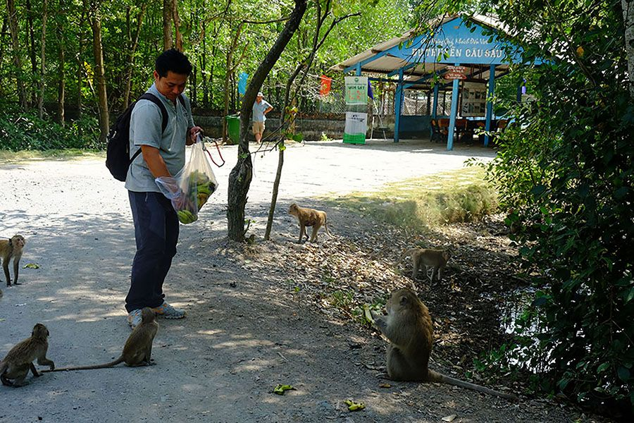Feeding monkey in Can Gio Forest Tour