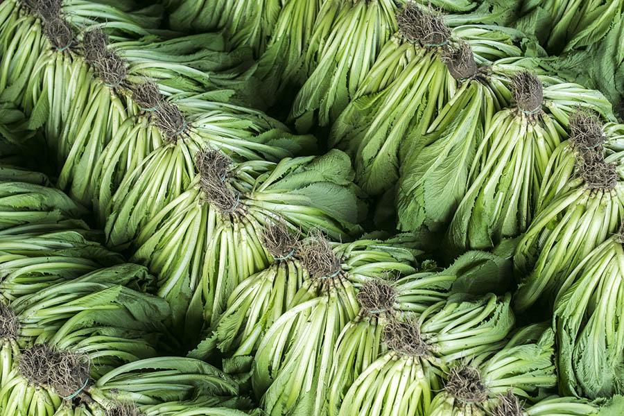Organic Farm in Cu Chi