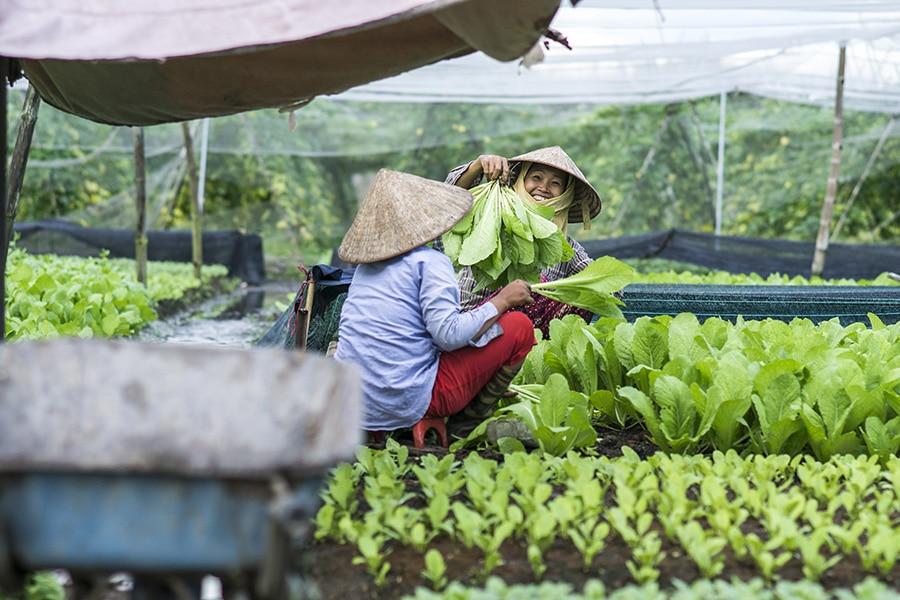 Organic Farm in Mekong Delta